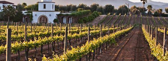 The Mexican Wine Revolution