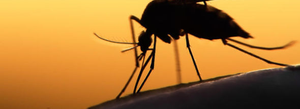 zika puerto vallarta
