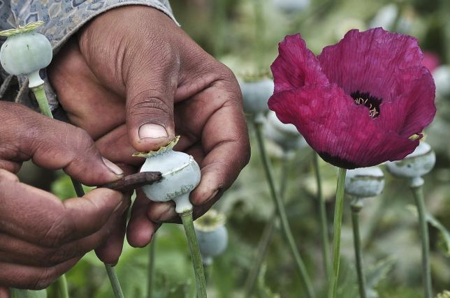 mexico opium