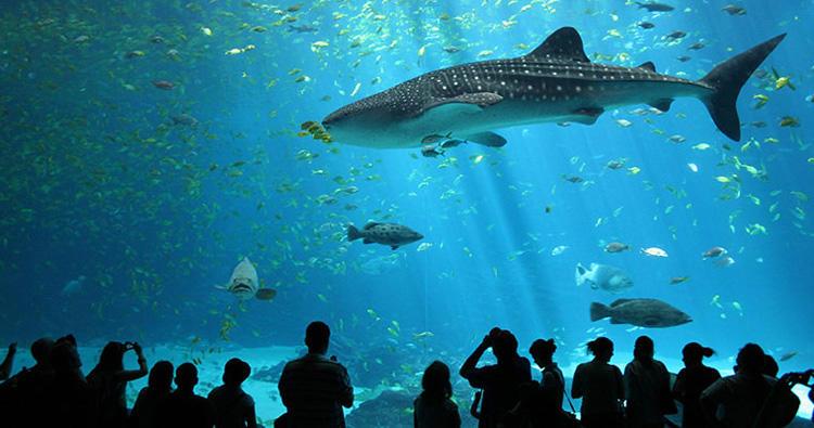 puerto vallarta aquarium