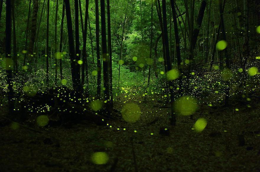 firefly mexico
