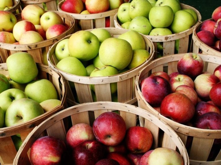 Mexico ends tariffs on U S  apple imports