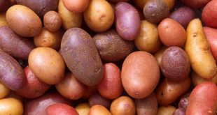 Mexican judge bans imports of potatoes from U.S.