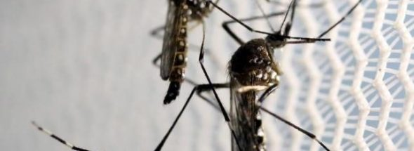 zika vaccine