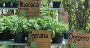 Group pushes for new laws to promote medicinal plants, not pharmaceuticals