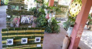 Enthusiastic reception of artexhibition at the Vallarta Botanical Garden