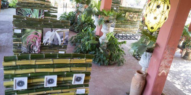 Entusiasta recepción de exhibición de arte en el Jardín Botánico de Vallarta
