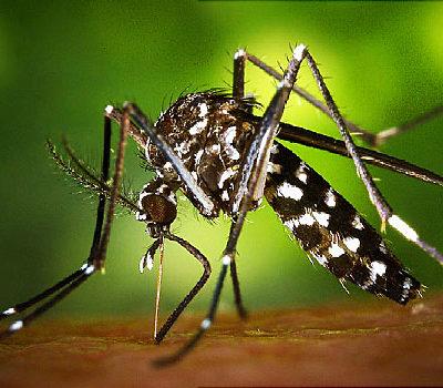 zika mexico