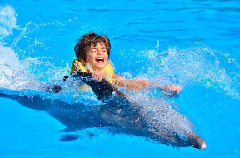 no dolphin swim