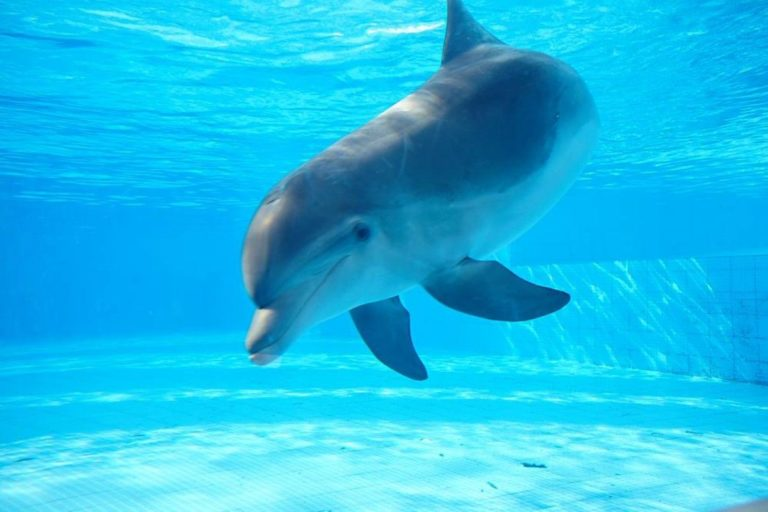 Mexico City is first to ban Dolphin Shows in Mexico