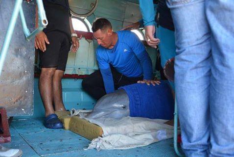 dolphin rescue cuba