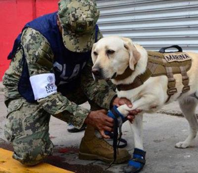 frida rescue dog