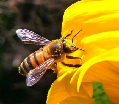world bee day