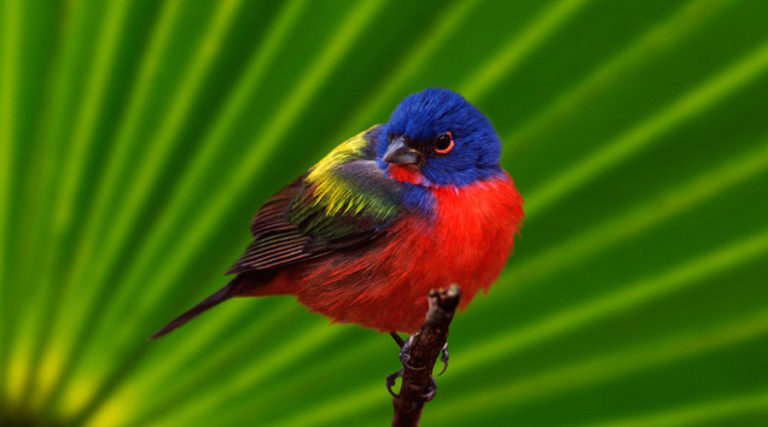 puerto vallarta bird watching