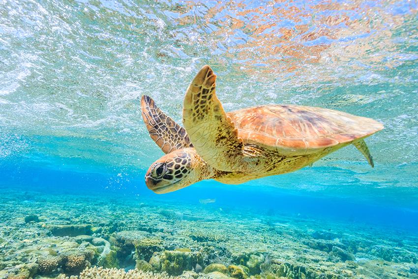 Playa Xcacel sea turtle