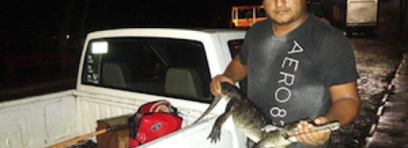 puerto vallarta crocodile