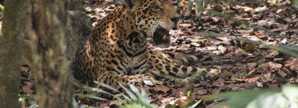 aztec animals