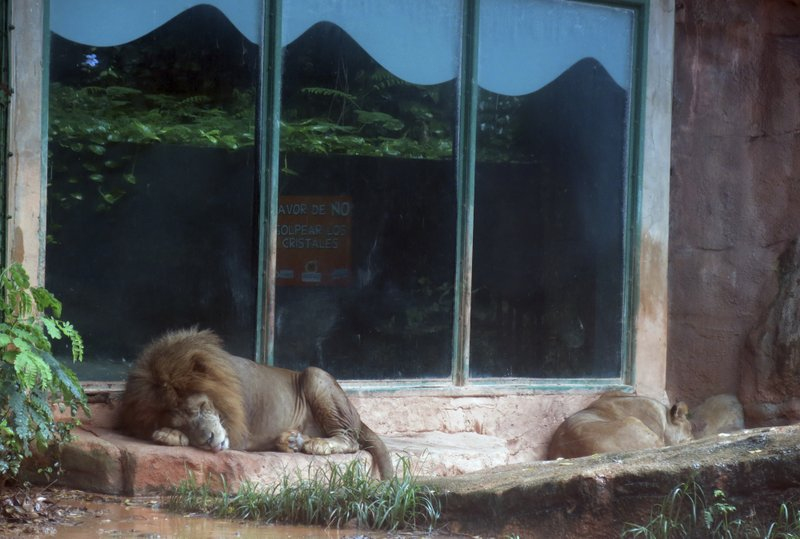 Animal rights Activists demand closure of Puerto Rico zoo after deaths