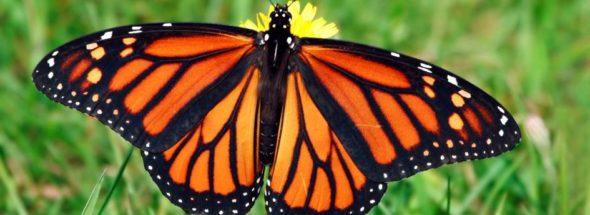 monarch mexico