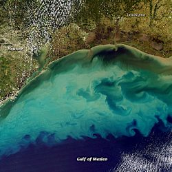 The 'dead zone' of the Gulf of Mexico is approaching a record level